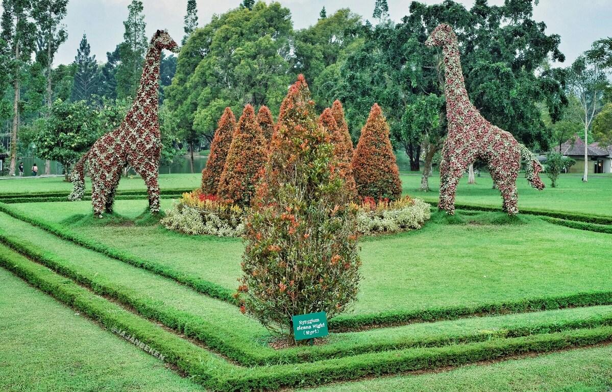 17 Objek Wisata Di Taman Bunga Nusantara Panduan Lengkap