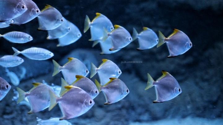 jajanbeken indonesia underwater live