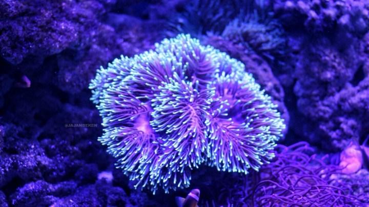 jajanbeken jakarta aquarium location
