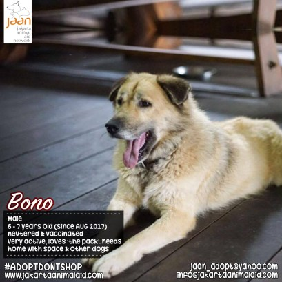 Bono is one of our bigger, beautiful males. He has a fluffy coat & is quite a large mix breed. He has a great personality & is extremely active. He loves the other dogs & would be best suited for a home with heaps of space & many other dogs as he just loves 'running with the pack'.