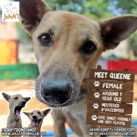 This is little Queenie. She was found sitting next to a busy road in Sukabumi. She had a horrible skin condition and would not have survived if she was not rescued as she was too little and weak to take care of herself. She is now happy, healthy and easy going. Queenie would most likely fit in anywhere. She is playful and friendly .. A perfect companion for anyone. If interested or have any more questions please email jaan_adopt@yahoo.com :)
