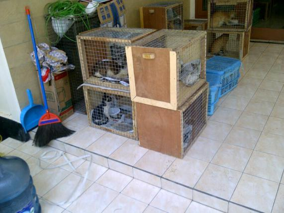 Cats in crates ready to be taken to our clinic.