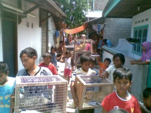 Local children helping out with the catching of all the cats.