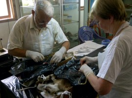 Our 2 foreign veterinarians helping with sterilizations.