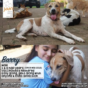 Meet Barry. This handsome boy was born on the streets behind a hospital. He was living there with his parents & family, one big pack. The hospital started to renovate their facilities & one by one the Dogs stated to disappear, except for Barry. Luckily a kind lady contacted us as she felt sorry for him. When we rescued Barry he had also been hit by a car a week before, but thankfully he has recovered well & is looking for his forever home! He is very easy going, gets along well with other dogs, so he will fit in anywhere. He is also super cuddly .. Everything you want in a dog!