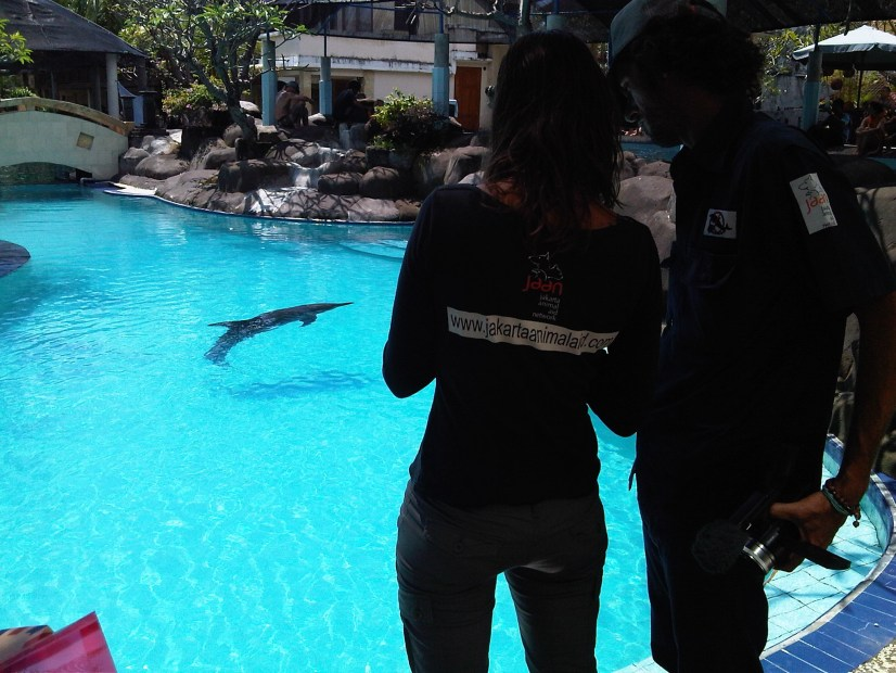 20 Attachment JAAN team inspects another wild caught dolphin at melka hotel april 2011 copy