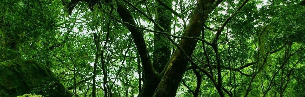 rainforest-moss-wallpaper-other-nature_00431375
