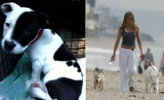 Jennifer Aston and her rescues Dolly & Sophie.
