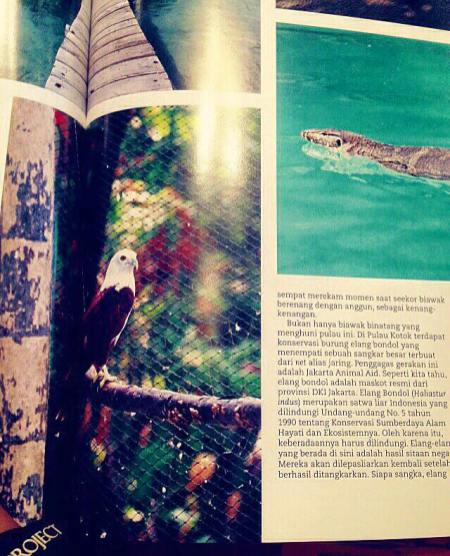 JAAN was featured in the AirAsiaIndonesia Inflight Magazine of December 2015! You can read all about Raptor Rescue & Rehabilitarion Centre on Kotok Island, Pulau Seribu!