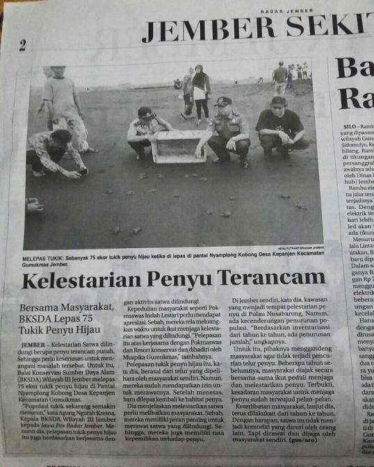 JAAN & the Forestry Department in Jember Newspaper about the release of 75 highly endangered sea turtles!