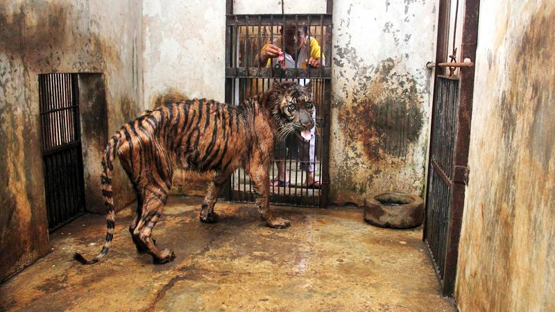 indonesia-zoo-of-death