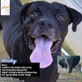 Adopt Wesley