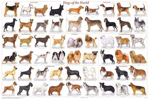 Mengenal Sejarah Anjing Jakarta Dog Lovers
