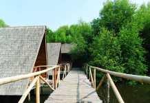 Hutan mangrove jakarta - jakartatraveller.com - wisata jakarta