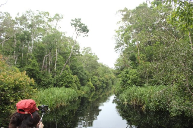 Black River on The Way to Camp Leakey - jakartatraveller
