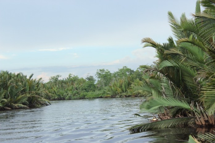 Nipa Palms view along Sekonyer River