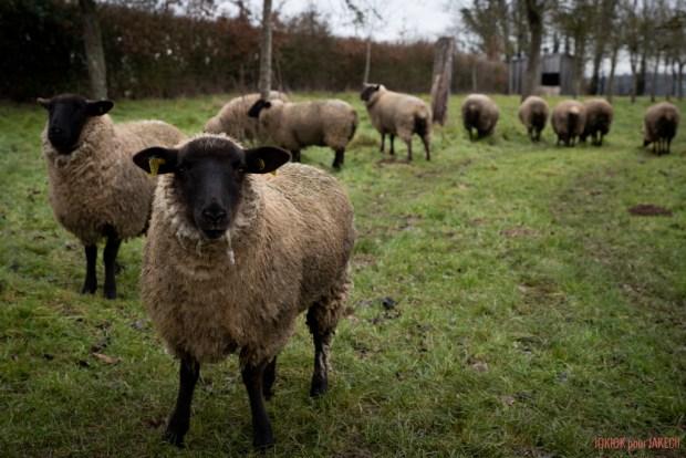 Jakecii Gérard - Manteau République du Chiffon - Les moutons
