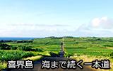 喜界島 海まで津木菟一本道