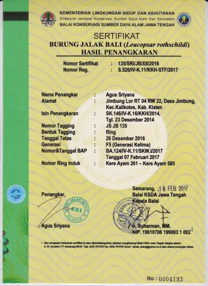 Ready Stock Anakan Burung Jalak Bali Bersertifikat Resmi BKSDA - 04 Maret 2017