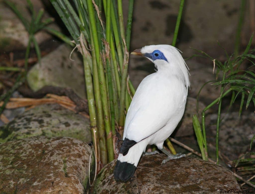 Source - Trend burung
