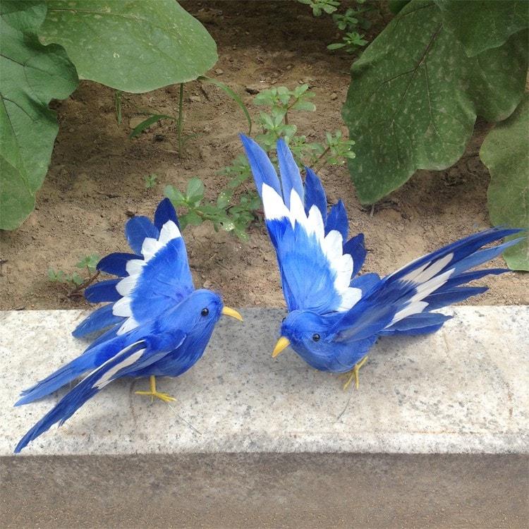 Kecantikan Blue jay