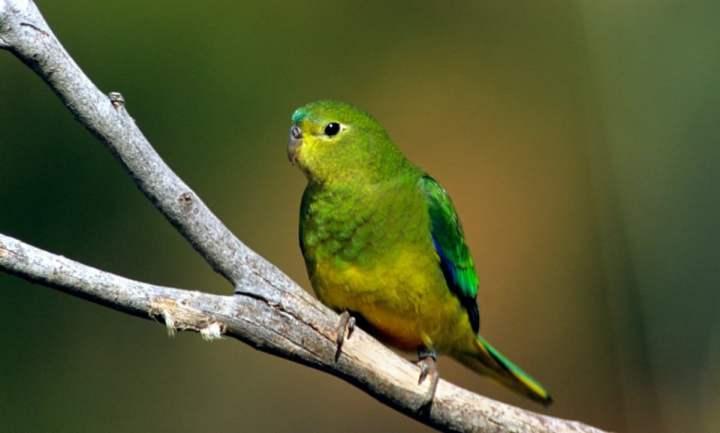 Kerusakan ekosistem dan perburuan liar kerap kali mengusik kenyaman spesies yang tinggal d Sepuluh Burung Langka Yang Nyaris Punah Dari Muka Bumi