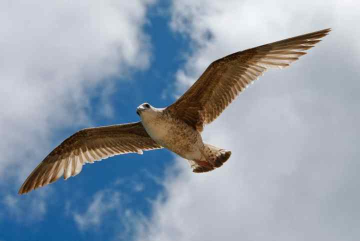 Burung dapat mengalami stress berat akhir sikap pemilik atau benda yang ada di sekitarnya Tips Menjinakkan Burung Berkicau biar Tidak Liar dan Takut dengan Majikannya