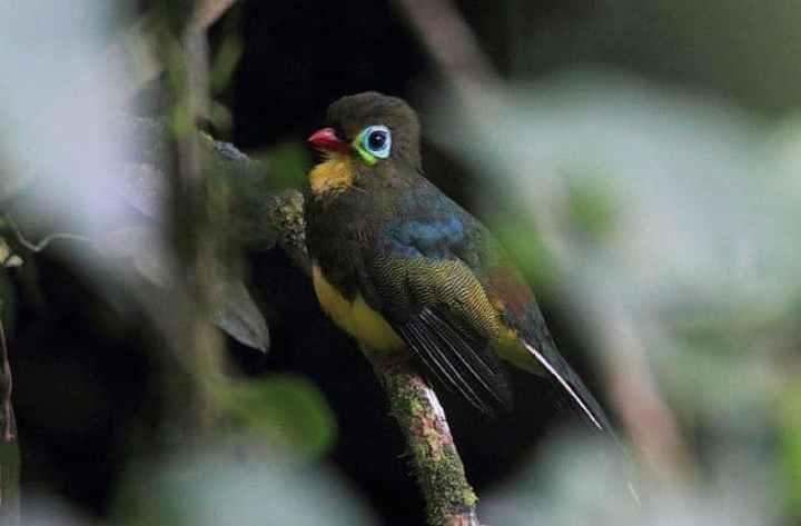 Luntur Sumatera