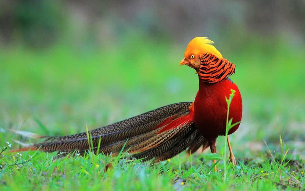 65 Gambar Burung Elang Tercantik Gratis