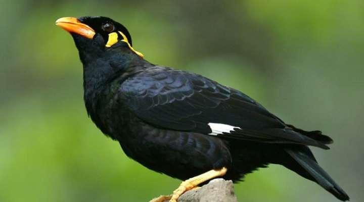 Ingin Burung Beo yang Pandai Berbicara? Perhatikan Dulu 5 Hal Ini