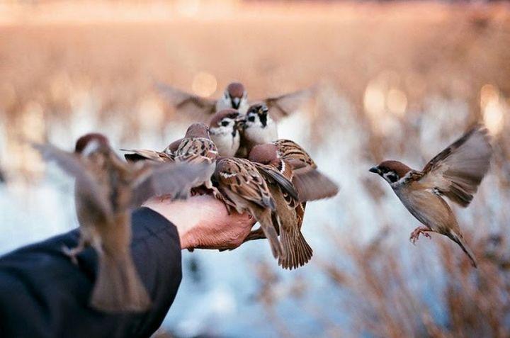 Burung Bisa Menghilangkan Depresi