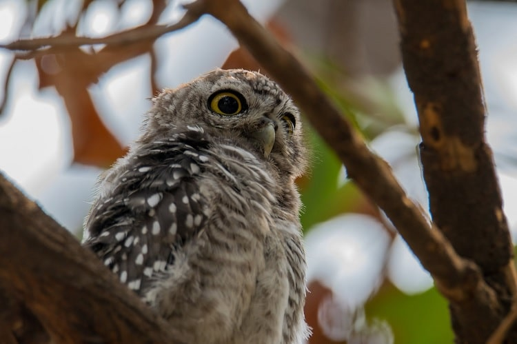 9 Cara Merawat Burung Hantu Yang Baik dan Benar Untuk Pemula