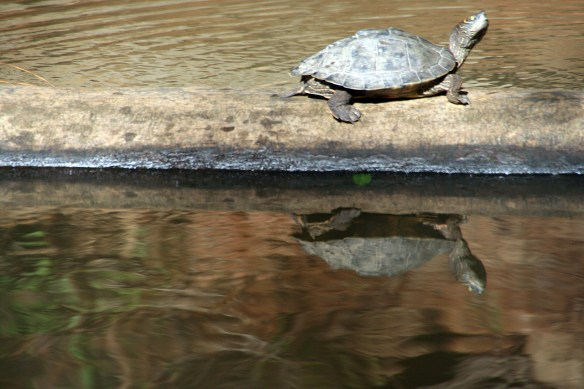 This friendly little turtle didn't budge as we  cruised closer..