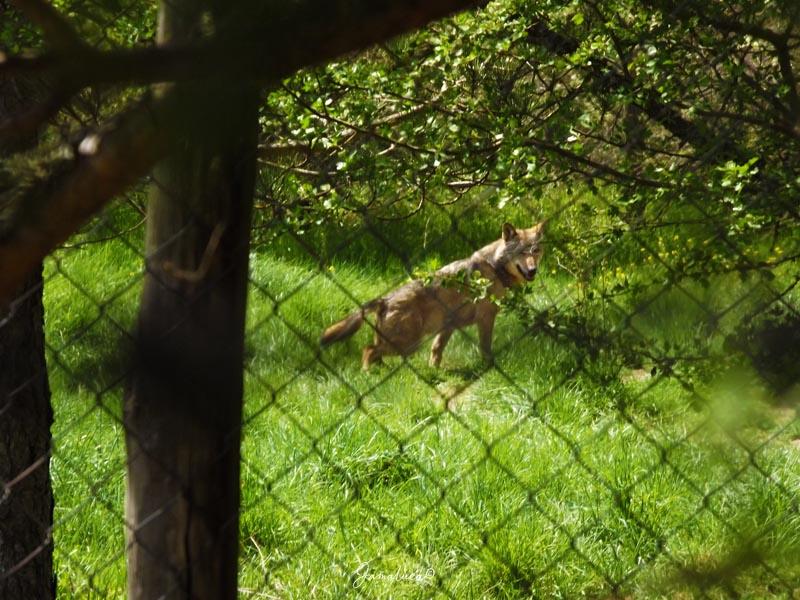 Centro visite Cupone lupo