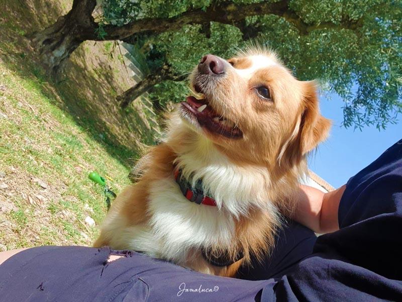 Assisi con il cane
