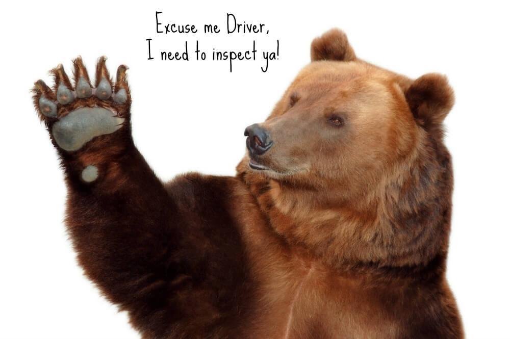 Bear Inspection