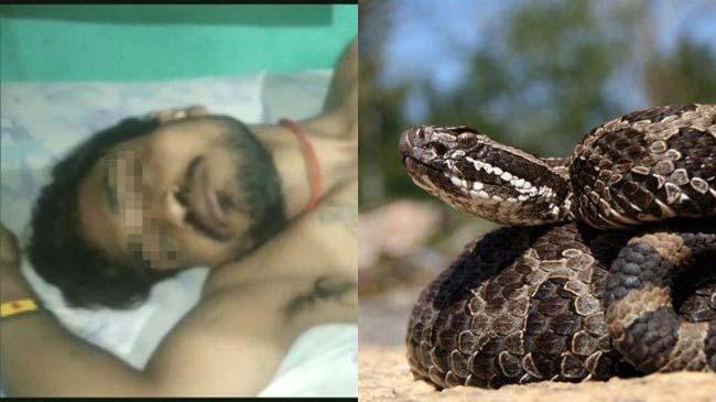 ilustrasi-ular