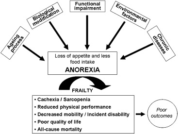 The Anorexia of Aging: Is It a Geriatric Syndrome