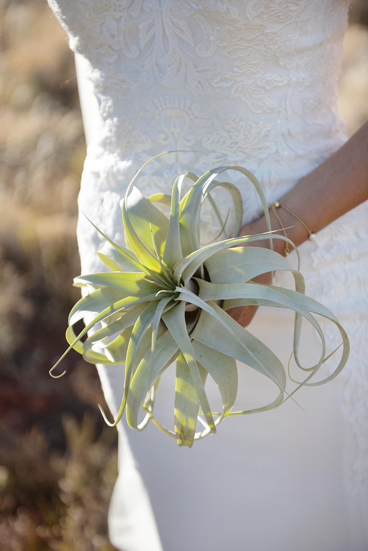 Agave Sedona wedding succulant