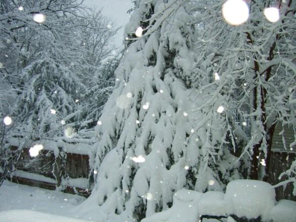 snow on cedar