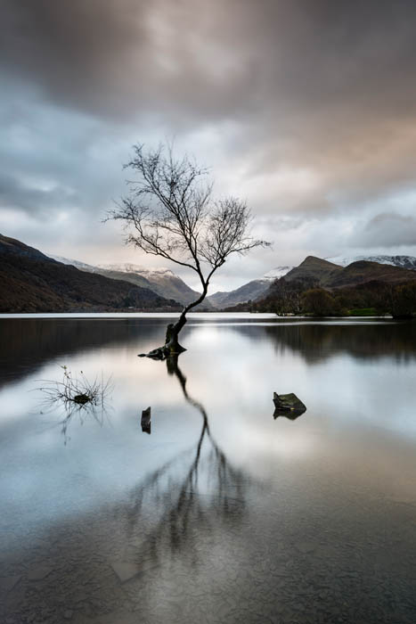 Lone tree at Llyn Llanberis in Snowdonia, North Wales.