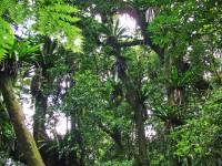 Canopy: Canopy Layer
