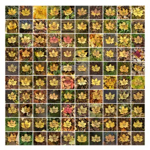 100-lost-leaves