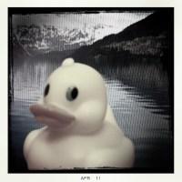 Ducky's World Tour