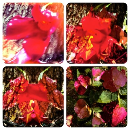 Grigsby's New Flowers (22my.11) 1
