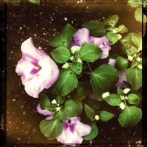 Grigsby's New Flowers (22my.11) 5