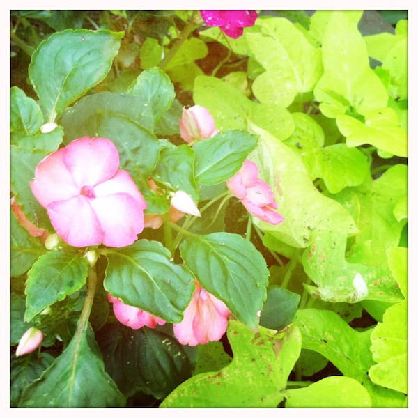 Grigsby's New Flowers (22my.11) 9