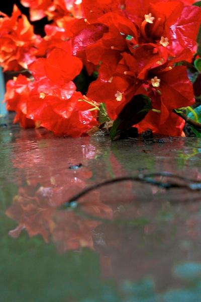 365.161 june showers on silk flowers