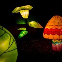 Chinese Lantern Festival47 untitled©JamesECockroft 20130104