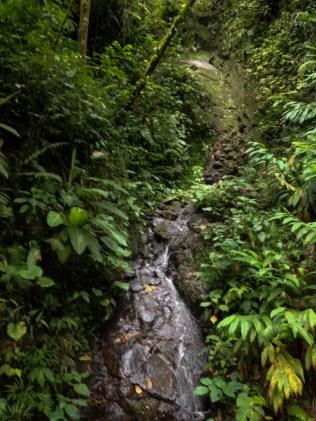 7-52-34 Costa Rica iPhone|dead waterfall|©JamesECockroft-20130822